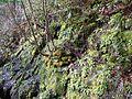 Spring-Foliage ForestWander.JPG