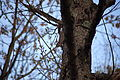 Squirrel-barking-at-me-on-a-tree - West Virginia - ForestWander.jpg