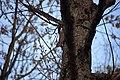 Squirrel-barking-at-me-on-a-tree - West Virginia - ForestWander.jpg