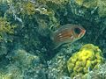 Squirrel Fish (13002600574).jpg
