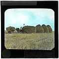 Stacking Grain Sheaves (S2004-914 LS).jpg