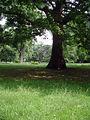 Stadtgarten-Köln-E-Im-Park-011.JPG