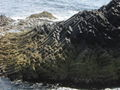 Staffa beside 14624.JPG