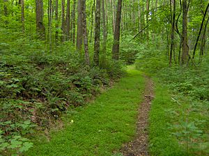 Standing Stone State Park - Hardwood forest along the crest of Cooper Mountain