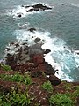 Starr-050405-5751-Sonchus oleraceus-habitat-Alau-Maui (24115888893).jpg