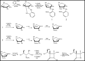 Thienamycin - Figure 4. Stereoselective Formation of the Lactam Ring