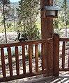 Steve the Squirrel, Grand Lake, CO 8-28-12 (8003990357).jpg