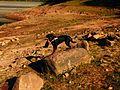 Stoned Alpha - panoramio.jpg