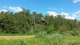 De Alde Feanen National Park - Image: Storks in Alde Feanen