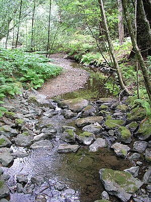 River ecosystem - This stream in the Redwood National and State Parks together with its environment can be thought of as forming a river ecosystem.