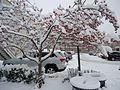 Summit New Jersey tree with snow and parking lot.JPG
