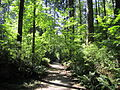 Sunnyside Acres - main path.JPG