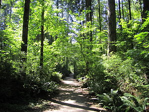 South Surrey - Sunnyside Acres is a large urban forest in the region