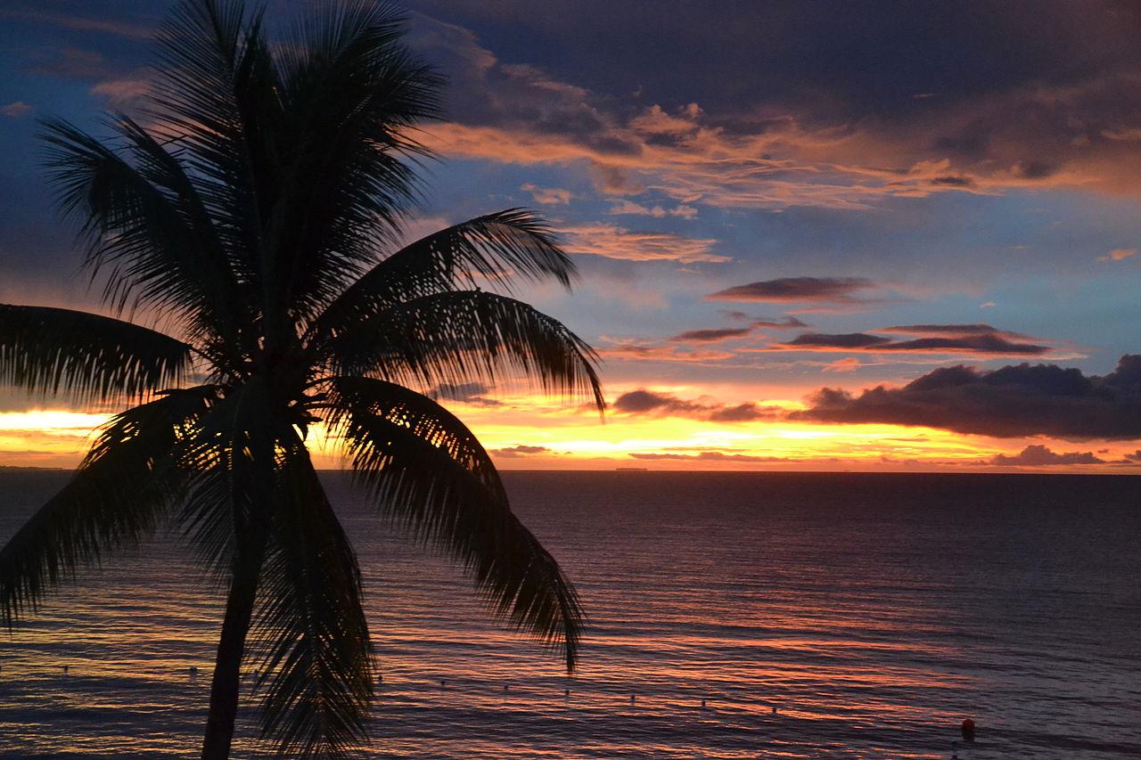 File:Sunset Palm Tree (6753868547).jpg