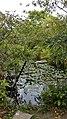 Taipei Daan Park - Small Ecological Pool - 20180715 - 03.jpg