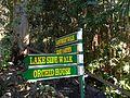 Tamborine Mountain Botanic Gardens 01.JPG