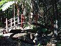 Tamborine Mountain Botanic Gardens 14.JPG