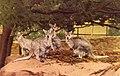 Taronga Park Zoo (26813115280).jpg