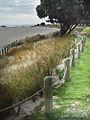 Tauranga Coast (6044965460).jpg