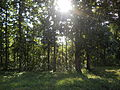 Teak Plantations at Parambikulam Tiger Reserve.JPG