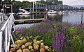 Teddington Lock. - panoramio (5).jpg