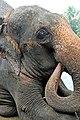 Thailand-3634 - Is your name Tarzan (3702003150).jpg