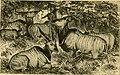 The African sketch-book (1873) (14801302503).jpg