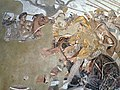 The Alexander Mosaic depicting the Battle of Issus between Alexander the Great & Darius III of Persia, from the House of the Faun in Pompeii, Naples Archaeological Museum (5914216805).jpg