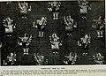 The American Museum journal (c1900-(1918)) (17538608734).jpg