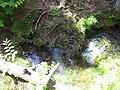 The Source at Olive Lake - panoramio.jpg