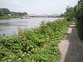 The Thames Path at Barnes - geograph.org.uk - 1952421.jpg