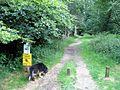 The Track alongside Thunderdell Wood, Ashridge - geograph.org.uk - 1378653.jpg