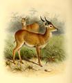 The book of antelopes (1894) Cobus vardoni.png