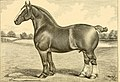 The breeds of live stock, and the principles of heredity (1887) (14781148225).jpg