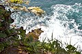 The tip of Cape Flattery, the northwesternmost point in the continental United States (3590789833).jpg
