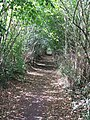Through The Hedge - geograph.org.uk - 1470427.jpg