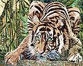 Tigre se désaltérant.jpg