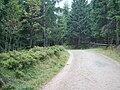 Torfhausmoor 2008 PD 11.JPG