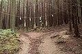 Trail of Mt.Futatsuya 03.jpg