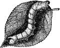 Trattato completo di agricoltura I fig128.jpg