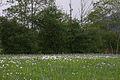 Trautenfels niederstuttern 57833 2014-05-14.JPG
