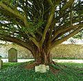 Tree - panoramio (23).jpg