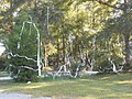Tree Rolled With Toilet Tissue.jpg