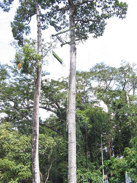 File:Tree Top Adventure - panoramio.jpg