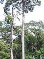 Tree Top Adventure - panoramio.jpg