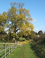 Tree at track corner near Dagworth - geograph.org.uk - 1009225.jpg