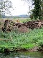 Tree trunk blocking access to old stepping stones - August 2012 - panoramio.jpg