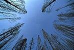 Trees-sky.jpg