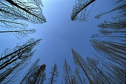 The sky's zenith appears centered in this daytime photograph taken looking up though trees