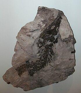 Trematosauridae family of amphibians (fossil)